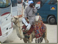 Giza Camel Ride Vendor (Small)