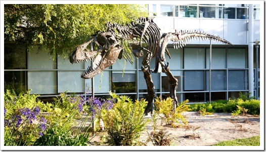 T-rex at GooglePlex