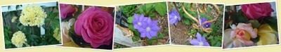 View mollys garden