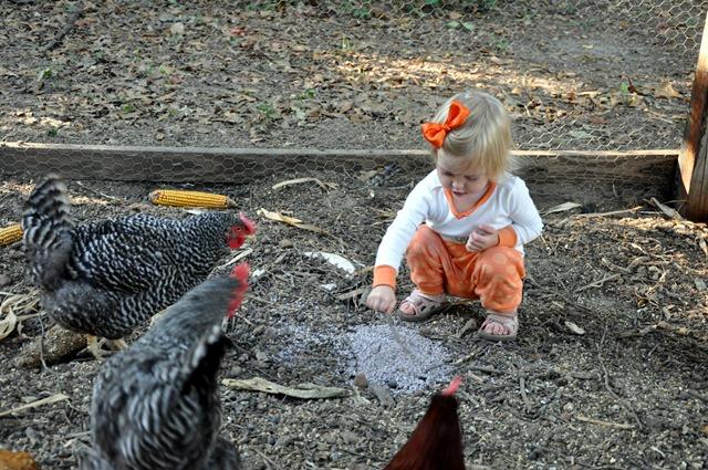 [chickens 102310 (7)[3].jpg]