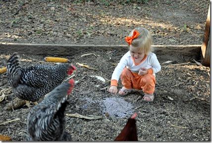 chickens 102310 (7)