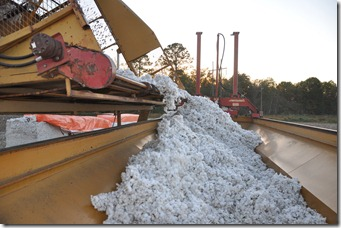cotton harvest 2010 (26)