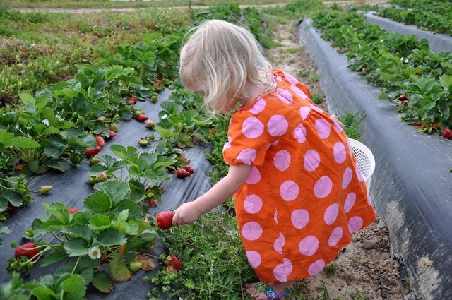 [strawberry love 032611 (4)[3].jpg]