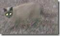 gatta mordicchio