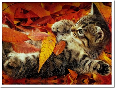 осень4