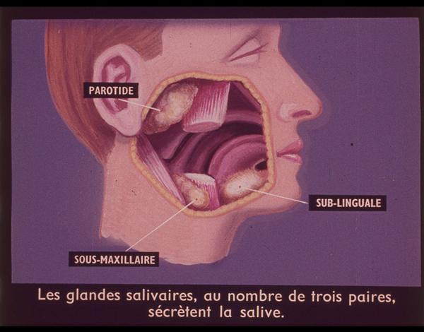 Films fixes et publicités de quartier sur www.filmfix.fr : Les mystères de la digestion