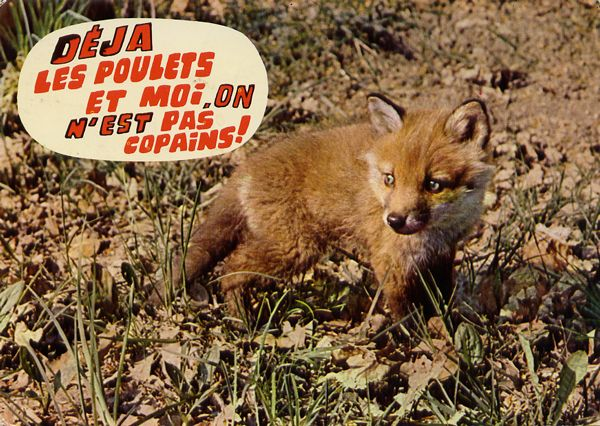 Cartes Postales Pop et  Kitsch des années 50, 70 et 70 - Pop and kitsch vintage postcards from the fifties, the sixties and the seventies : Animaux rigolos