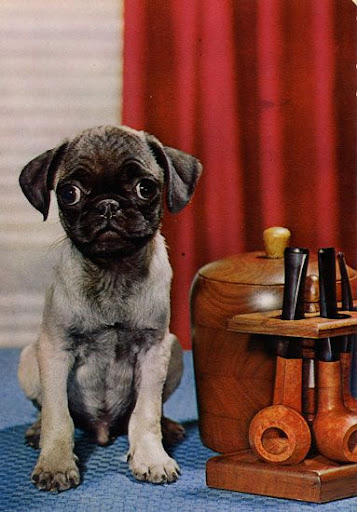 Cartes Postales Pop et  Kitsch des années 50, 70 et 70 Cute dogs / Gentils chiens