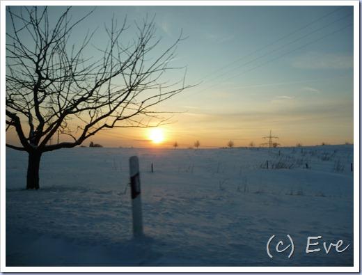 Januar 2010 033