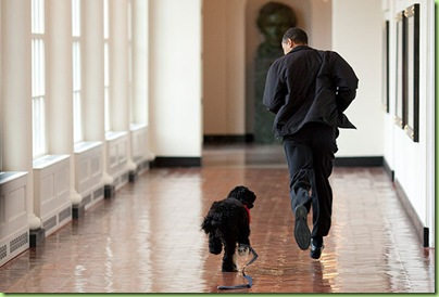 bo-dog-with-obama-041309-xlg