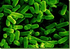 bacteris