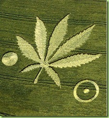crop-circles_weed2