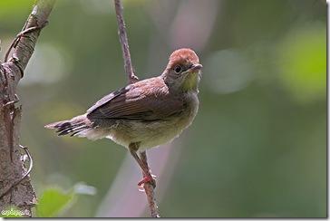 Las crias saltan muy rapido del nido.