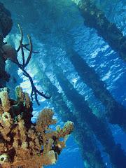 Pijlers van de Salt Pier