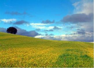 campos verdes blog
