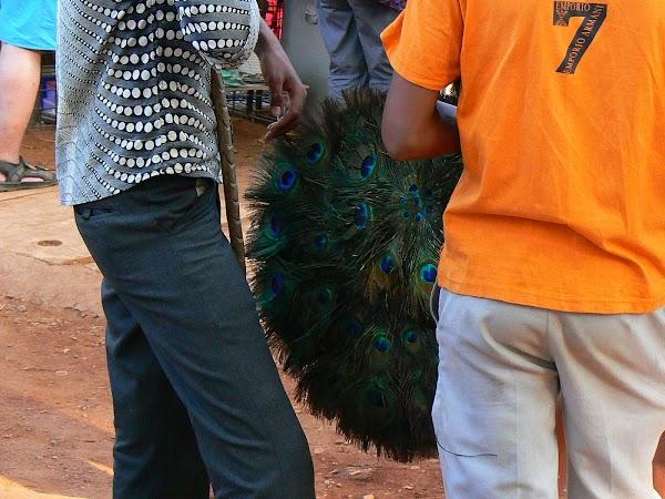 Imagini India Goa: cozi de paun la Anjuna market