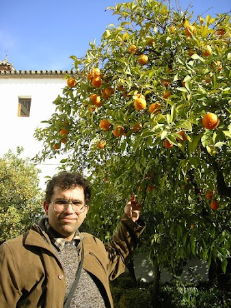 Obiective turistice Spania: portocali in Alcazar Cordoba