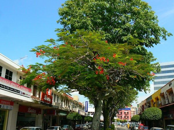 Atractii Malaezia: strada mare Pulau Labuan
