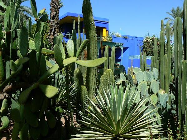 Obiective turistice Maroc: cactusi