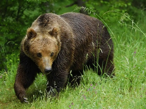 list of major species bears_www.wonders-world.com_1201