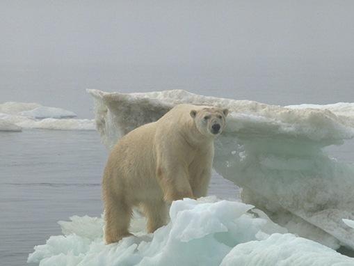 most-endangered-species on-earth_www.wonders-world.com_20