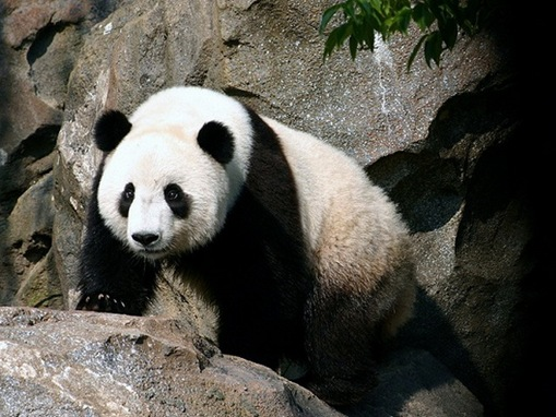 endangered earth World wildlife fund - the leading organization in wildlife conservation and endangered species learn how you can help wwf make a difference.