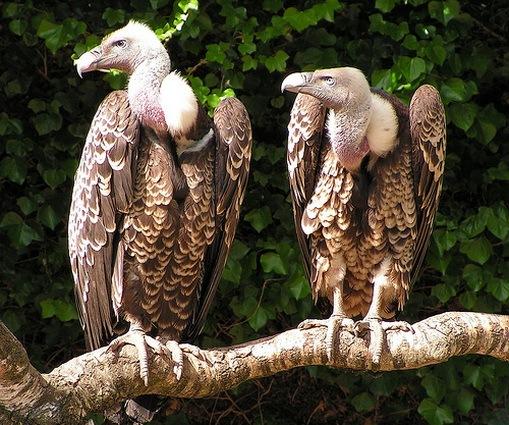 http://lh6.ggpht.com/_DeVkd7Dag10/TFAly84ypjI/AAAAAAAADOw/ta-8-znUeaE/Vultures_thumb.jpg?imgmax=800