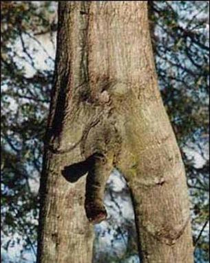 The NSFW Tree