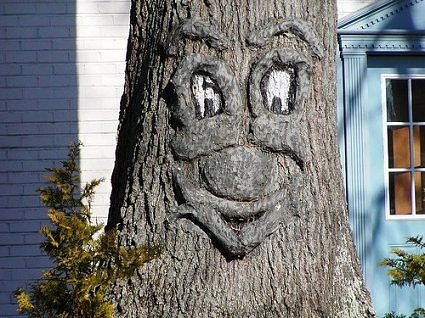 "As part of a larger series, here is a ""tree face."""