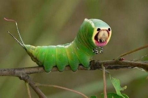 Insects-that-look-like-aliens-005
