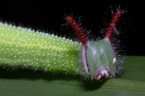 Insects-that-look-like-aliens-010