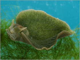 bizarre-sea-slug