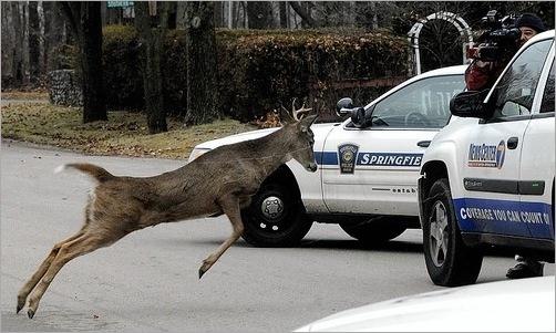 animals-attacking-cars-06