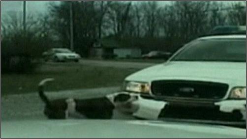 animals-attacking-cars-08