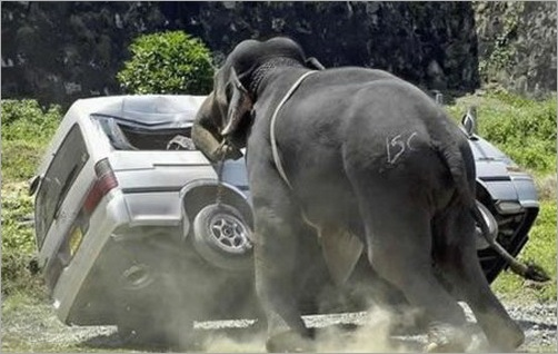 animals-attacking-cars-18