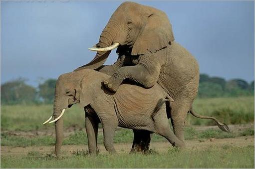 Animal Typed Love
