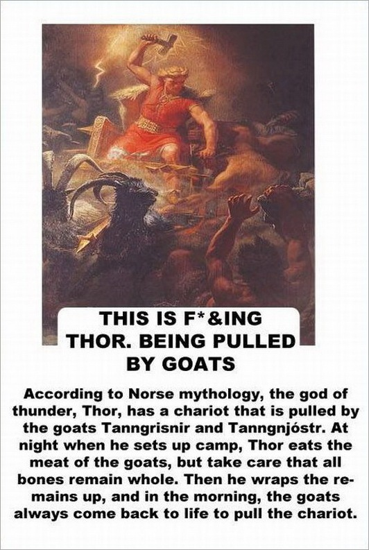 facts about the goat -2147483643