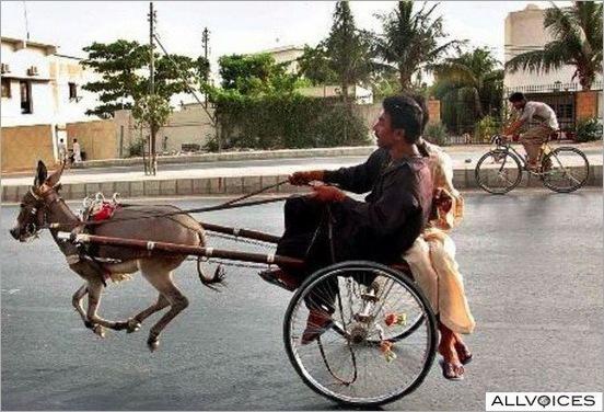 funny moment donkey life 10