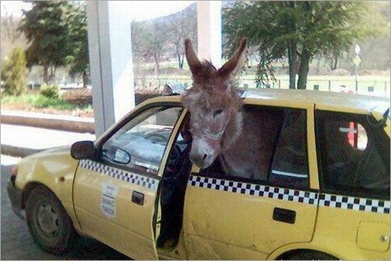 funny moment donkey life 12