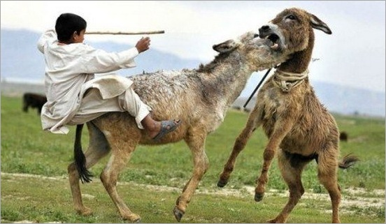funny moment donkey life 13