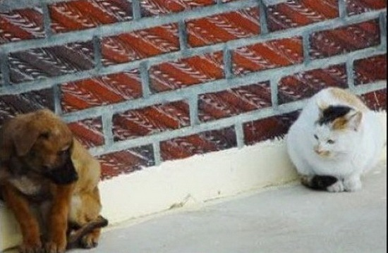 cats_and_dogs_2