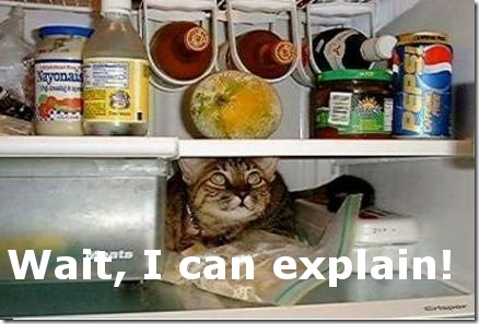 Funny Pictures: Cat inside the fridge