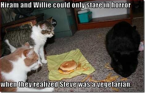 Funny Pictures: Vegetarian cat