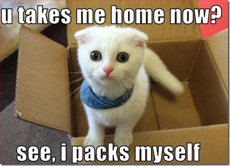 Funny Pictures: Cute kitty packing herself
