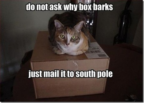 Questions Funny Cat Funny Pictures Cat Wants You