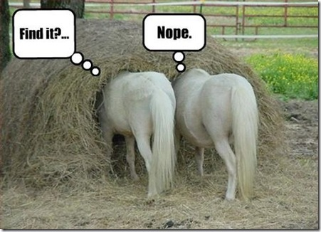 Pictures of Funny Animals (funny horse pics): Finding the lost in the haystack