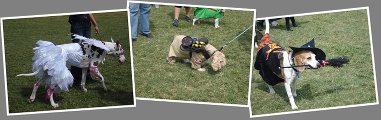 View dog costumes