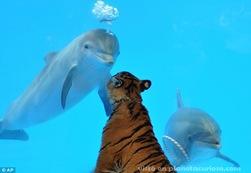 delfin-tigre-amigos3