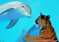 delfin-tigre-amigos