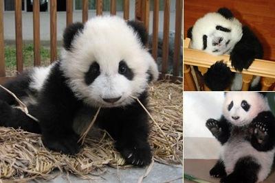 View Pandas
